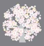 De boombloesem van Sacura Stock Afbeelding