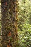De boomboomstam die door een mos wordt behandeld royalty-vrije stock afbeelding
