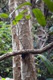 De boomboomstam en schors van close-upchambak royalty-vrije stock afbeelding