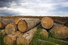 De boomboomstammen die van de besnoeiing op grond liggen Stock Foto's