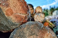 De boomboomstammen sneden in voorgrond en unfocussed achtergrond stock afbeelding