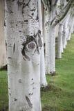 De boomboomstammen van de daling Stock Fotografie
