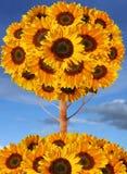 De boomcollage van de zonnebloem royalty-vrije stock fotografie