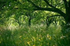 De boomgaard Stock Foto's