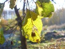 De boomgaard van de appel Vorige herfst bladeren stock foto