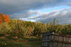 De Boomgaard van de appel Stock Afbeelding