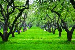 De boomgaard van de appel in de lente Stock Afbeeldingen