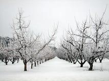 De boomgaard van de appel in de winter Royalty-vrije Stock Afbeelding