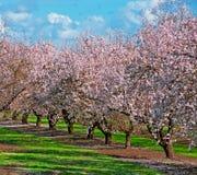 De Boomgaard van de Boom van het fruit stock foto