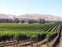 De Boomgaard van de druif stock afbeeldingen