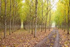 De Boomgaard van de herfst royalty-vrije stock foto's
