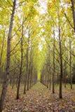 De Boomgaard van de herfst royalty-vrije stock fotografie
