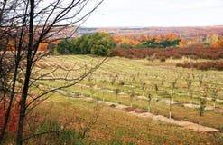 De Boomgaard van de kers in de herfst Stock Afbeeldingen