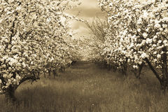 De boomgaard van de lente royalty-vrije stock foto