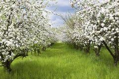 De boomgaard van de lente royalty-vrije stock fotografie