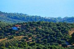 De boomgaard van de olijfboom in Griekenland stock afbeelding