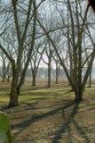 De boomgaard van de pecannoot Stock Afbeeldingen