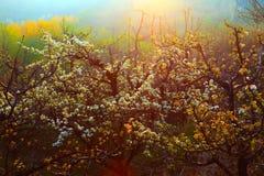 De boomgaard van het fruit stock fotografie