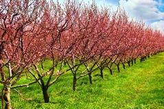 De boomgaard van het fruit royalty-vrije stock afbeeldingen
