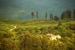 De boomgebieden van de thee dichtbij Batumi, West-Georgië Stock Fotografie