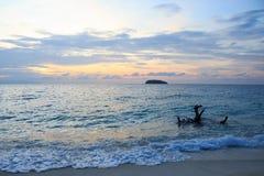 De boomhout van de doodswortel op kuststrand en duidelijk geel zand, warme zonsondergang Stock Foto