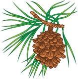 De boomkegel van de pijnboom Stock Foto