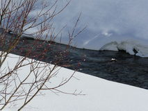 De boomknoppen klampen zich aan het leven vast door sneeuwrivier Wassen, Zwitserland royalty-vrije stock fotografie