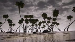 De boomoceaan van onweerspalmen stock footage