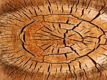 De boompopulier van texturen Royalty-vrije Stock Fotografie