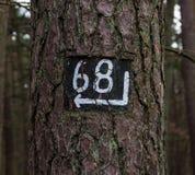 De boomrichting voorziet van wegwijzers Royalty-vrije Stock Afbeeldingen