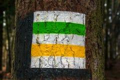 De boomrichting voorziet van wegwijzers Stock Afbeelding