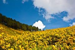 De boomrij van de pijnboom met maxican zonnebloemonkruid Stock Foto's