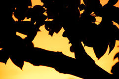 De boomsamenvatting van de peer Stock Foto