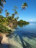 De boomschaduw van kokosnoten Stock Afbeeldingen