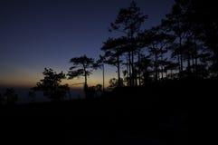 De boomsilhouet van de pijnboom op bergzonsondergang Royalty-vrije Stock Afbeeldingen