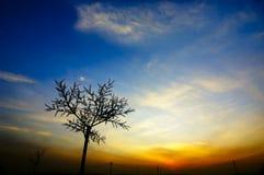 De boomsilhouet van de zonsondergang Stock Fotografie