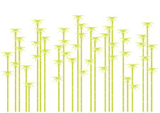 De boomsilhouetten van het bamboe,   Stock Fotografie