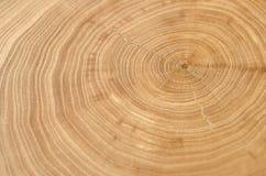 De boomstam die van de iepboom de groeiringen tonen royalty-vrije stock fotografie