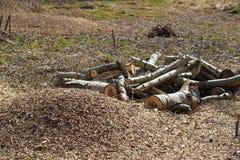 De boomstam en de spaanders van de besnoeiingsboom Royalty-vrije Stock Afbeeldingen