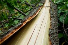 De boomstam en de schors van een gebroken boom concept: de gevolgen van slecht weer royalty-vrije stock afbeeldingen