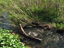 De boomstam in het water van kleine rivier Stock Afbeeldingen