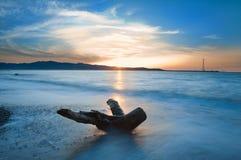 De boomstam op de kust. Stock Afbeelding
