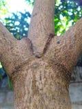 de boomstam van de aardboom stock foto