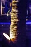 De boomstam van de Backlightpalm in dark van nacht stock foto