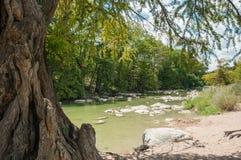 De boomstam van cipresboom op de voorgrond en de rivier op achtergrond in Pedernales valt nationaal park in Texas royalty-vrije stock afbeeldingen