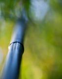 De boomstam van de bamboeboom Royalty-vrije Stock Afbeeldingen