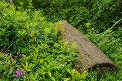 De boomstam van de besnoeiingsboom Stock Foto's
