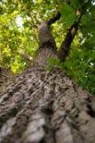 De boomstam van de boom Stock Fotografie