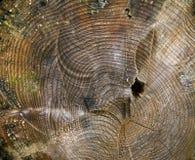 De boomstam van de boom Stock Foto's