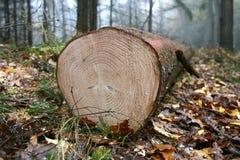 De boomstam van de boom royalty-vrije stock foto